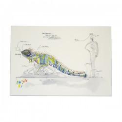 Croquis Iguane
